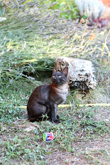 Kip (Slya Cabret) Tags: cats cute animal cat gatos gato felino miau