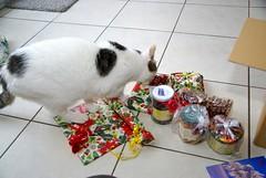 Nelli kontrolliert den Inhalt/Nelli checking the Contents (frankbehrens) Tags: cats tom cat chats chat gatos gato katze katzen kater wichteln wichtel julklapp wichtelpaket