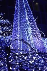 (hauko) Tags: christmas winter lights tokyo illumination canoneoskissx2