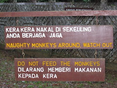 Naughty Monkeys Around