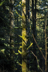 Into the Woods (EricEwing) Tags: tree forest moss woods pacificnorthwest ericewing
