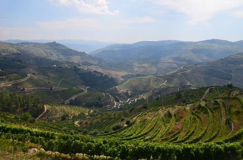 Beloved of Dionysus, the Douro, Portugal