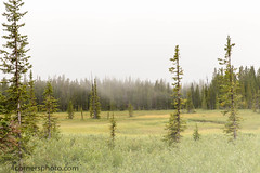 Foggy Meadow, Park County, Wyoming (4 Corners Photo) Tags: summer sky mountains color tree grass weather fog clouds rural forest landscape scenery unitedstates meadow evergreen vegetation northamerica wyoming cody beartoothmountains parkcounty beartoothhighway shoshonenationalforest 4cornersphoto