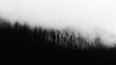 How To See Through The Hidden Things (John Westrock) Tags: blackandwhite landscape fog foggy nature trees pacificnorthwest snoqualmiepass canoneos5dmarkiii canon135mmf2lusm contrast johnwestrock pwlandscape monochrome washington wallpaper background