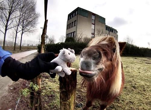 Ringo pony playing #rhino #adventuremascotte #r2s