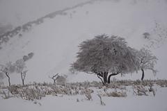 霧氷 (deep.deepblue) Tags: japan nikon 日本 冬 mie d610 竜ヶ岳 三重県 いなべ市