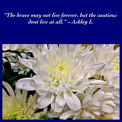 281 (EDWW day_dae (esteemedhelga)™) Tags: life flowers plants love beach me nature beauty loving garden blessings creativity hope living walks alone remember peace hand risk friendship time god you faith joy lakes parks belief celebration intelligence thoughts together gift quotes soul future dreams passion knowledge laughter worry strength positive care tomorrow happyholidays yesterday ponds teach sayings herb learn struggle fellowship gentle courage nightmares nurseries encouragement edww daydae esteemedhelga helpconfidence