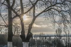 Feel my light (andrey.senov) Tags: park city morning trees winter sun fuji russia fujifilm province утро город россия солнце парк зима kostroma xa1 деревья 40faves кострома провинция twittertuesday fujifilmxa1