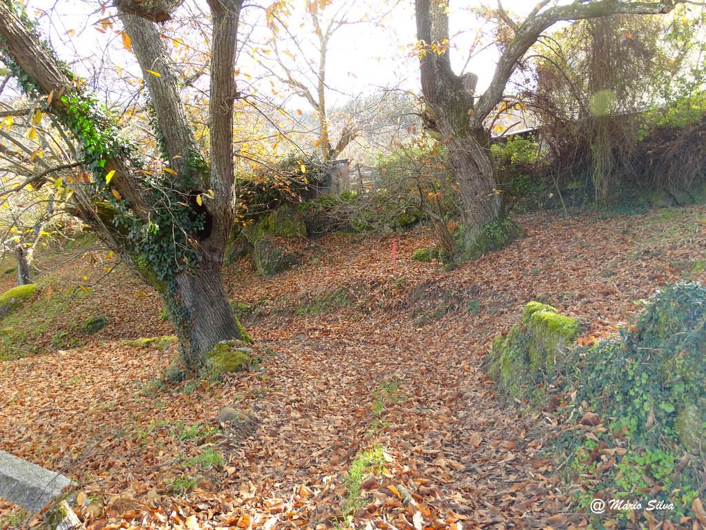 Águas Frias (Chaves) - ... as folhas dos castanheiros cobrem os caminhos ...