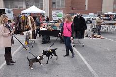 Batdog fighting crime (JamesCalder) Tags: dogs washingtondc fight play easternmarket batdog fujix100s