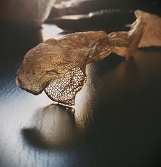 Snake skin. (Sharon B Mott) Tags: reptile snake boa boaconstrictor snakeskin