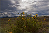 Flowers and Storm Clouds (K-Szok-Photography) Tags: california flowers backlight clouds canon landscape hills socal colton 5d canon5d canondslr cloudscape 2470l cloudscapes stormlight inlandempire flowercolors sbcusa kenszok kszokphotography