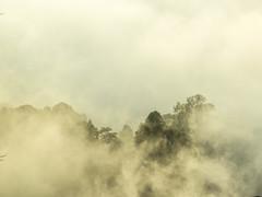 Dalam kabus menutupi hutan (thegunznroses1904) Tags: hiker travelasrar forest amateurtobepro travellight slowshutter sunrise haze morning nature