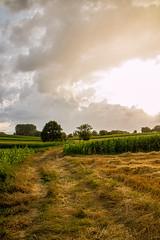 cloudy evening... (Andi Dietrich) Tags: cloudy evening abend wolken weite landschaft landscape outdoor cloud clouds wolke feld felder fields himmel sky tree baum kontrast contrast width