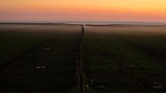 Nordsee Buhnen (patrickbochmann206) Tags: dike tidal flats mudsea fog groyne
