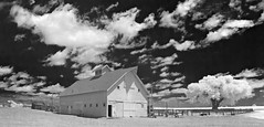 the Heckman Barn - Infrared (eDDie_TK) Tags: colorado co weldcountyco weldcounty weld timnath timnathco barns yellowbarns farming farms rural rurallife ruralliving infrared ir
