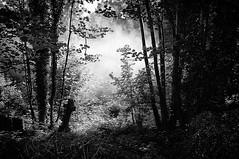 Cemetery Mist Rising (Steve Greene Photography) Tags: england blackandwhite mist cemetery grave graveyard bristol monotone graves spooky ghostly nikond40