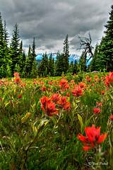 _JTP8359-1WM (jack.pickell) Tags: flowers trees plants mountains nature clouds landscape parks foliage manningpark d7100