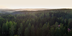 Nokia forests (m \ stenvik) Tags: luonto maisema mets forests evening aerial birch spruce pine