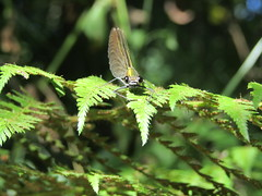 (Laura Rubio Lareu) Tags: liblula insect insecto nature verde green