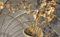NoMoRose (Tony Tooth) Tags: nikon d7100 nikkor 18105mm distorted distortion mbius moebius foliage leaves dead rose
