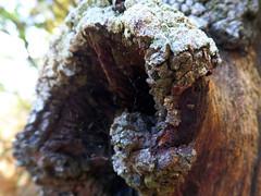 Lichen and spiderweb (jo.elphick) Tags: tree spider web australia bark lichen southcoastnsw narrawaleeinlet