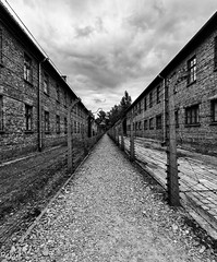 Entre bloques (Perurena) Tags: bloques edificios prision jail campodeexterminio vallas alambrada camino path ventanas celdas nazis judios auswitch polonia