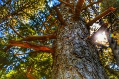 About prospective #sun #ray #nature #simple #awesome (sciarrettafrancesco) Tags: awesome simple ray sun nature