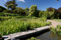 LIttle Bridge (Jocey K) Tags: newzealand bankspeninsula southisland motukarara irisgarden iris pond lilypond flowers trees clouds sky