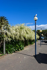 King of the Castle (Jocey K) Tags: newzealand bankspeninsula akaroa building hills trees sky clouds seagall bird wisteria lamps shadows