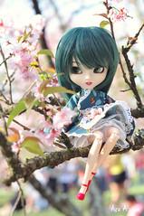 Alana  hanami (Au Aizawa) Tags: pullip haute ny newyork japanese fashion doll sakura matsuri blossom waloli tree sweetlolita