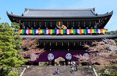 Chion-in (Douguerreotype) Tags: people tree cherryblossom purple buddhist buildings kyoto gate stairs architecture japan shrine temple steps