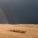 Tuscanian rainbow