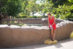 Turtles. (PeeterTomson) Tags: life summer animals 50mm zoo hawaii waikiki oahu good explore fujifilm honolulu yashica dsb f19 xa1