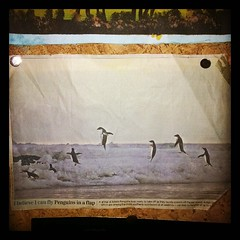 Newspaper Clipping (rjmiller1807) Tags: square penguin penguins newspaper jumping antarctica squareformat theguardian 2014 windowsphone adelie instagramapp uploaded:by=instagram nokialumia620