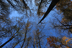 Looking Up (right2roam) Tags: autumn trees fall nature up forest woodland nebraska reserve omaha association fontenelle nealewoods right2roam