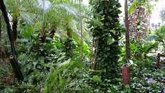 Rainy and stormy day! (ANNE LOTTE) Tags: park parque verde folhas garden pflanzen jardim grn bltter garten