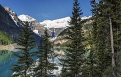 (NorthFla) Tags: trees mountain lake snow canada pine canon nationalpark glacier louise alberta banff larch nikcolorefexpro