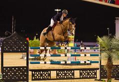 2015 CHI - Al Shaqab, Jumping (www.ziggywellens.com) Tags: horse jumping equine doha qatar chialshaqab