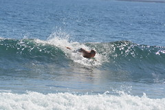 DSC_0077 (aliciadesign) Tags: surf whales bigisland honolii