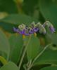 unique (Lalisi) Tags: naturaleza flores flower verde nature colors unique violet lilas violetas