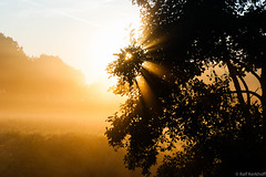 The Sun (ralf.kerkhoff) Tags: nebel sommer jahreszeit natur himmel sonne bume sonnenaufgang sonnenstrahlen botanik heubach mariaveen reken heubachwiesen