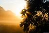 The Sun (ralf.kerkhoff) Tags: nebel sommer jahreszeit natur himmel sonne bäume sonnenaufgang sonnenstrahlen botanik heubach mariaveen reken heubachwiesen