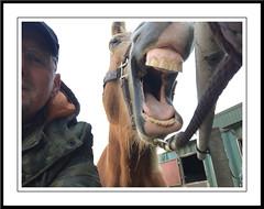 Pret met sarah (gill4kleuren - 14 ml views) Tags: horse sarah fun saar paard haflinger orse