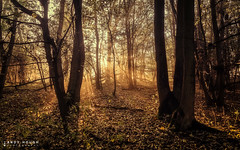 Intense (Andy Hough Photography) Tags: wood morning trees england sunrise woodland unitedkingdom sony sunrays dorchester a77 southoxfordshire sonyalpha andyhough slta77 littlewittenhamwood andyhoughphotography