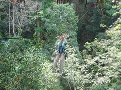 The Gibbon Experience Ziplines