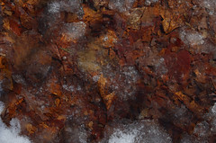 leafs ice (Carroll Violins) Tags: abstract ice nature gimp delaware leafs