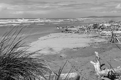 Driftwood at Bandon Beach (San Francisco Gal) Tags: bandon beach driftwood pacific ocean sea surf waves sand sky cloud oregon monochrome bw bn blackandwhite grass plant sweatlodge