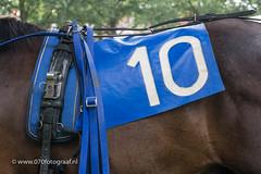 070fotograaf_20160728_063.jpg (070fotograaf, evenementen fotograaf) Tags: harnessracing racing draverij drafsport paardensport paardesport harness paardenmarkt holland netherlands nederland 070fotograaf kortebaandraverij voorschoten 2016 paarden draven kortebaan