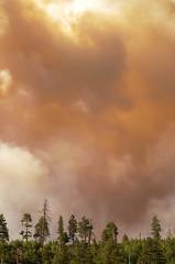DSC_0352 fire hdr 850 (guine) Tags: grandcanyon grandcanyonnationalpark canyon northrim fire smoke fullerfire trees plants hdr qtpfsgui luminance